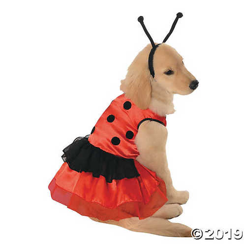Lovely Ladybug Dog Costume - Medium
