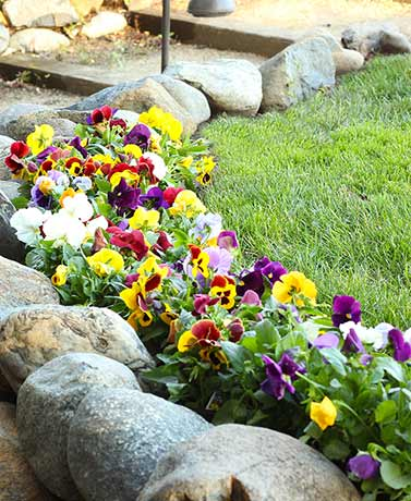 Cut-to-Size Flower Mats-Perfect Pansies
