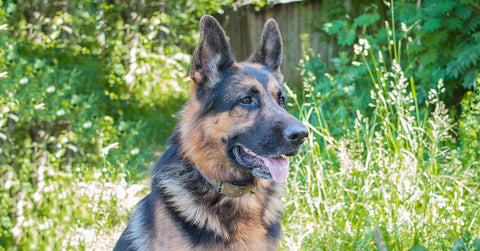 17 Things German Shepherd Owners Know So Well
