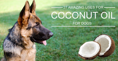 27 Amazing Uses For Coconut Oil For Dogs