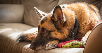 4 Steps To Raise A Calm And Relaxed Dog