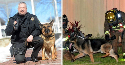 5 German Shepherd Heroes Who Lived To Tell About It