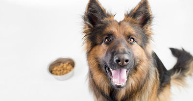 6 Super Foods That Will Keep Your Dog Healthy