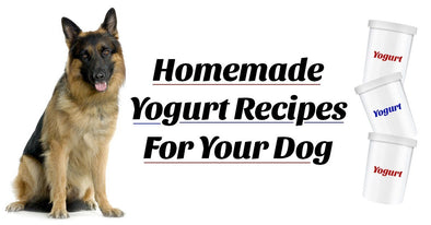 Homemade Yogurt Recipes For Your Dog