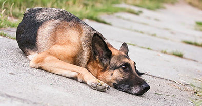 How to Exercise Your German Shepherd Dog When you're Sick or Hurt