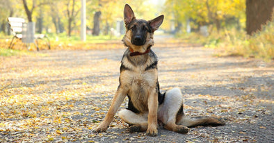 How To Teach Your Dog To Sit, Lie Down, Roll Over, and Play Dead  - Fast