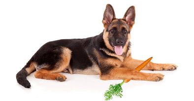 Why Carrots Are Good For Dogs