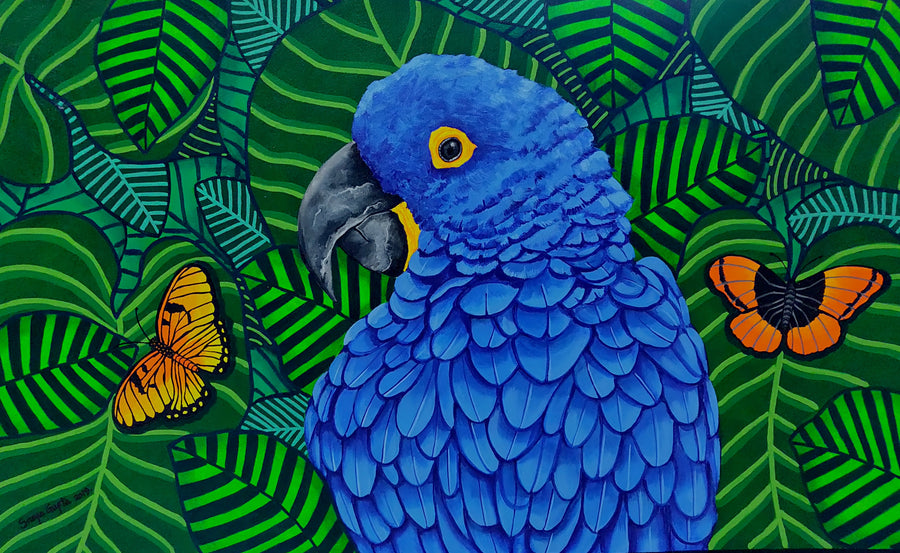 Birds in Focus : The Hyacinth macaw