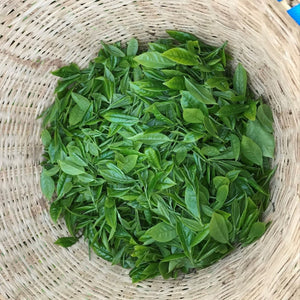 The Most Important Components of the TEA PLANT