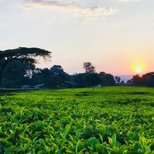 The Story Behind Our Journey To FRESH TEA - PT:1
