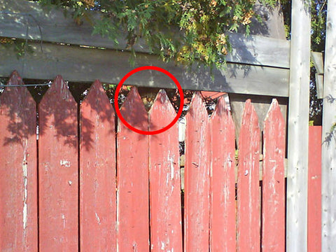 cat hiding behind a fence answer