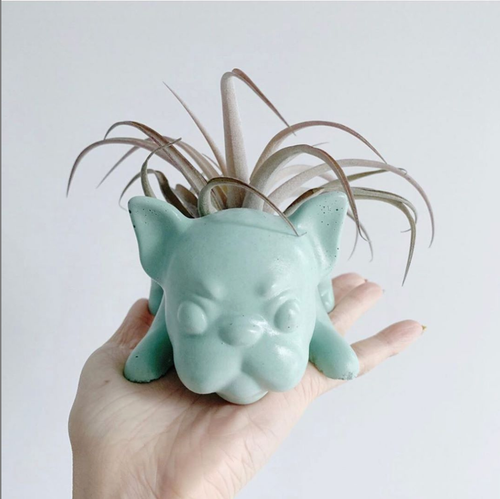 Frenchie Planter