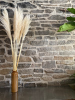 Single Stem Pampas Grass