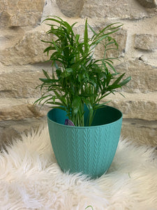 Pretty Little Pot, bluish green 3.5""