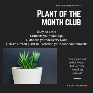 Plant of the Month 12 Month Subscription $300 Value