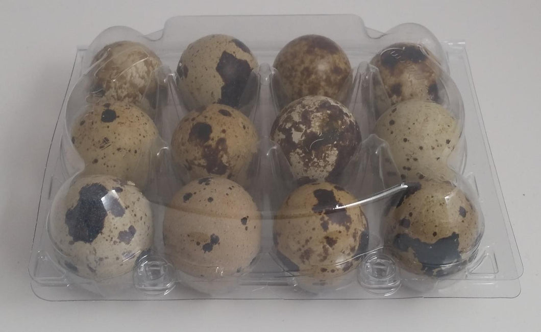 25 Clear Quail Egg Cartons (capacity 1 dozen)