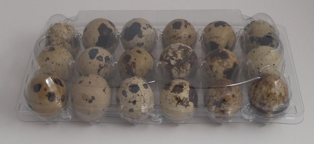 50 Clear Quail Egg Cartons (capacity 18 eggs)