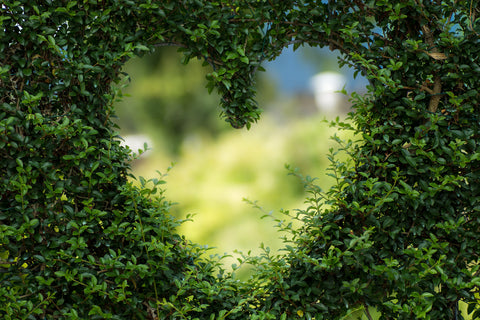 Heart in Hedge