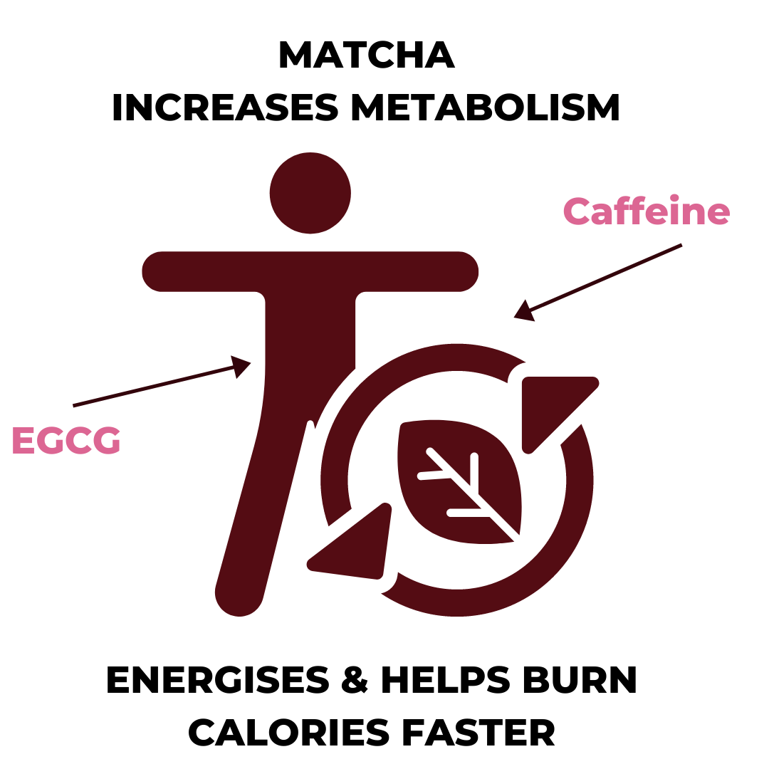 Matcha helps with weight loss increases metabolism graphic
