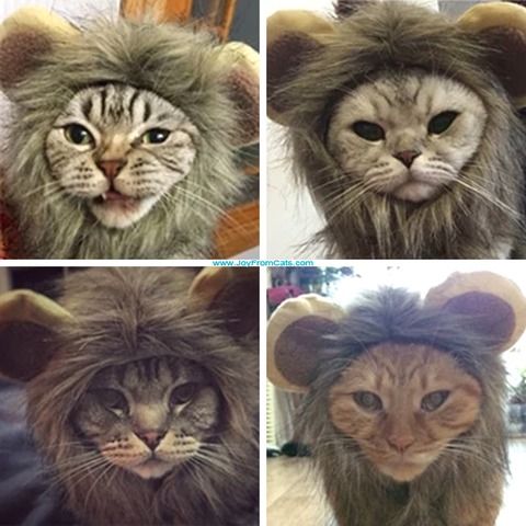 Lion-Kitty mane - www.JoyFromCats.com
