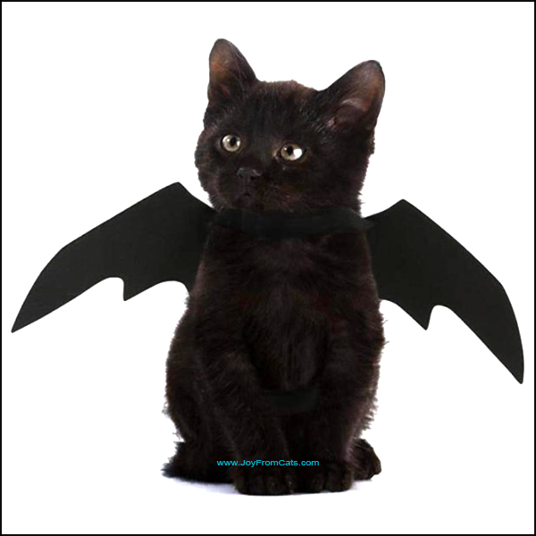 Funny Halloween Bat Wing Costume / Outfit For Your Cat - www.JoyFromCats.com