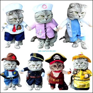 Funny Halloween Costumes / Clothes For Your Cat - www.JoyFromCats.com