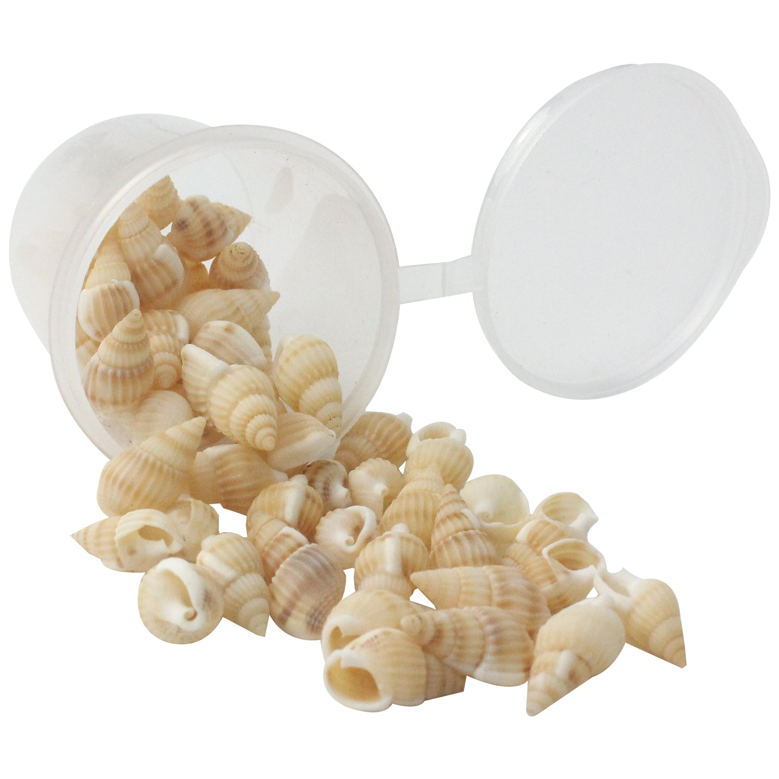 Mini Natural Beach Sea Shell Beige 1 Bottle