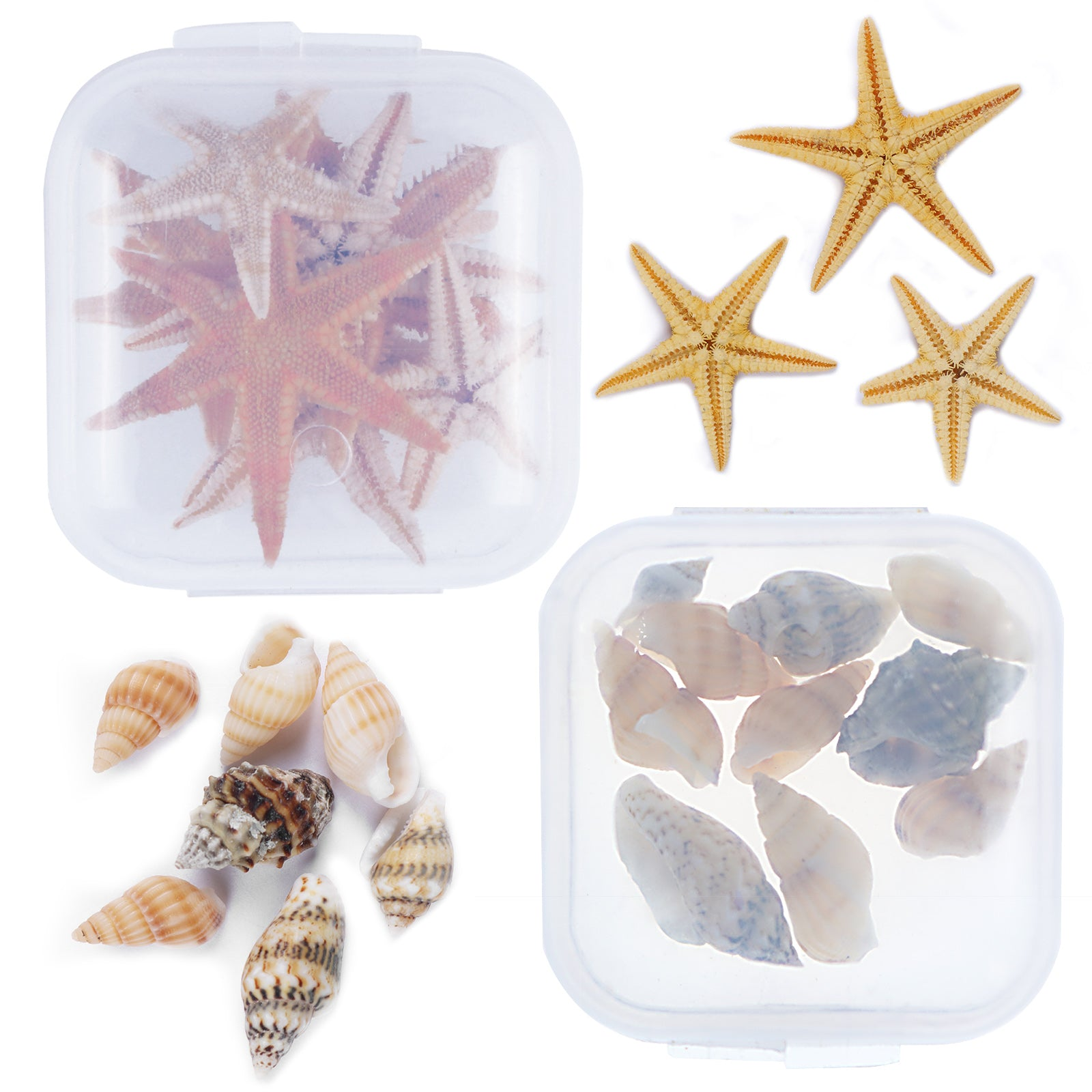 Mini Sea Shell & Starfish 2-pot