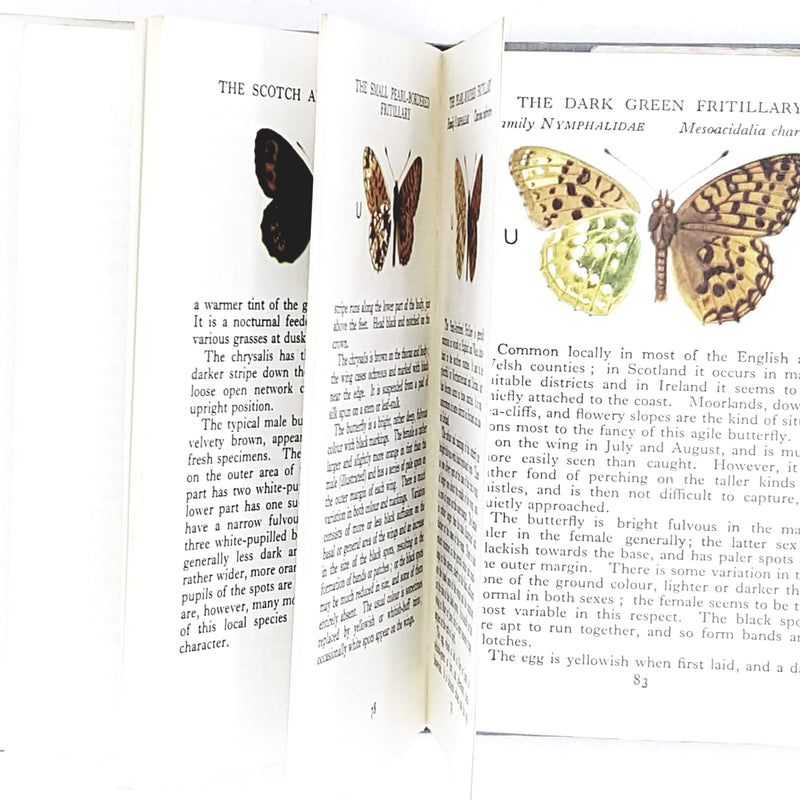 illustrated-observers-book-of-butterflies-1969-country-house-library