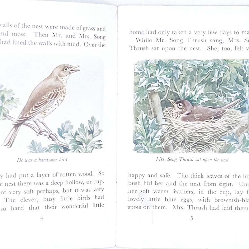 Illustrated First Edition Tales of the Wild Folk: The Tale of Tom Thrush by Cecily M. Rutley