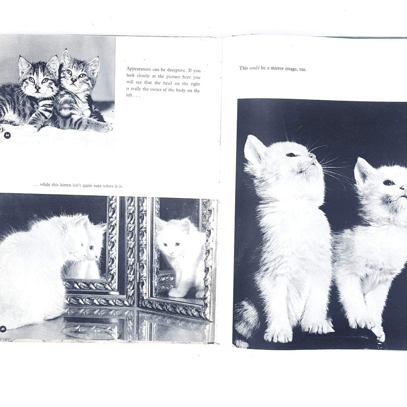 Introducing Kittens by Peter Jowett 1964