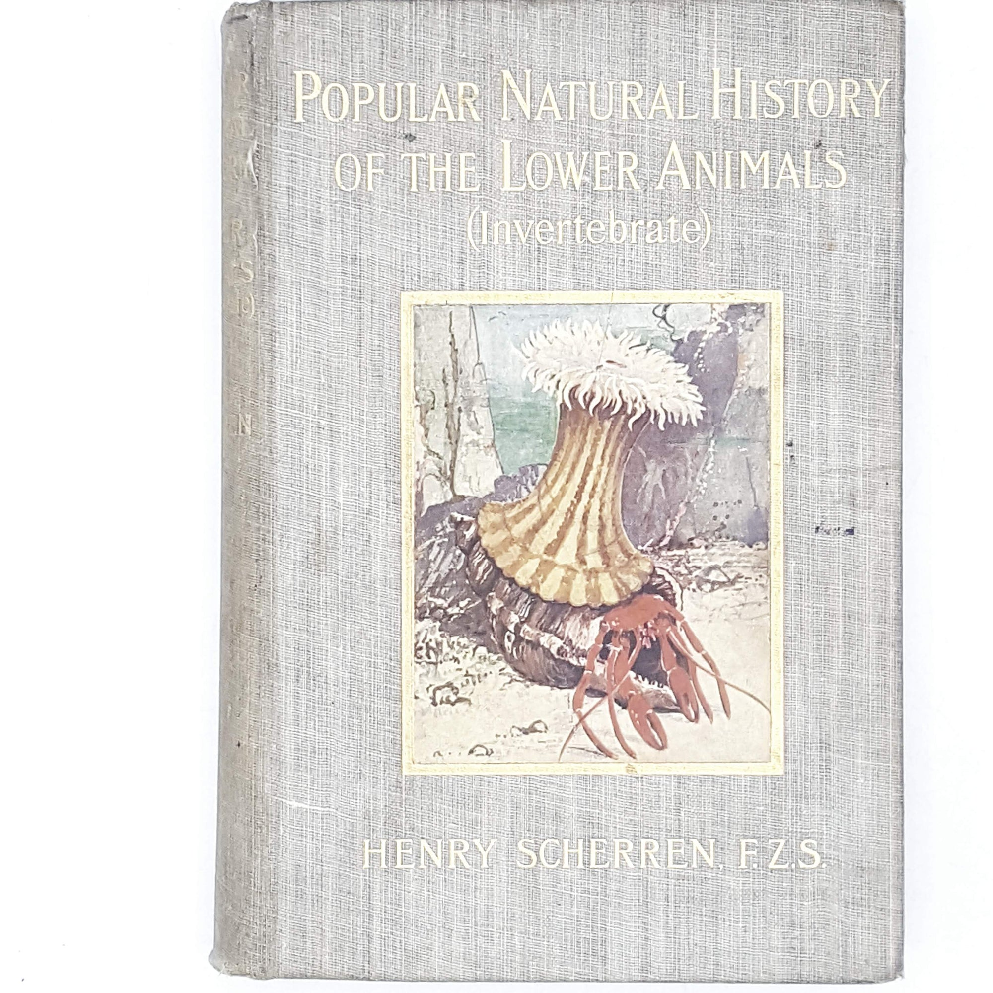 Popular Natural History of the Lower Animals (Invertebrate) by Henry Scherren 1903