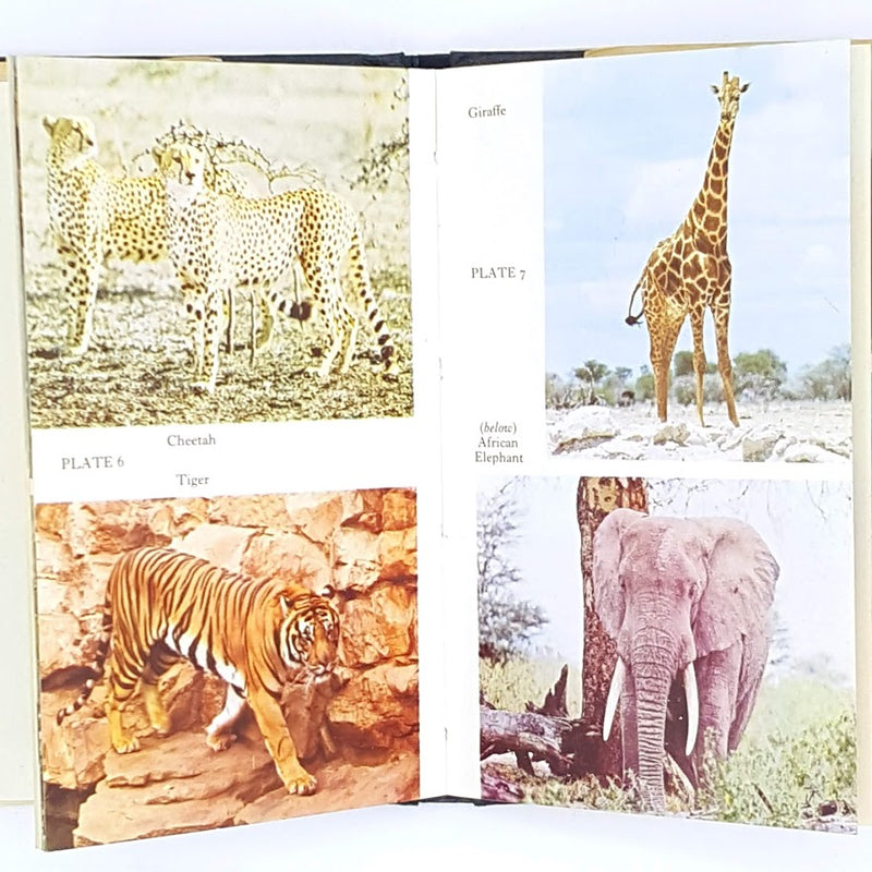 country-house-library-vintage-thrift-old-antique-books-decorative-patterned-classic-observer-zoo-animals-1972-first-edition-