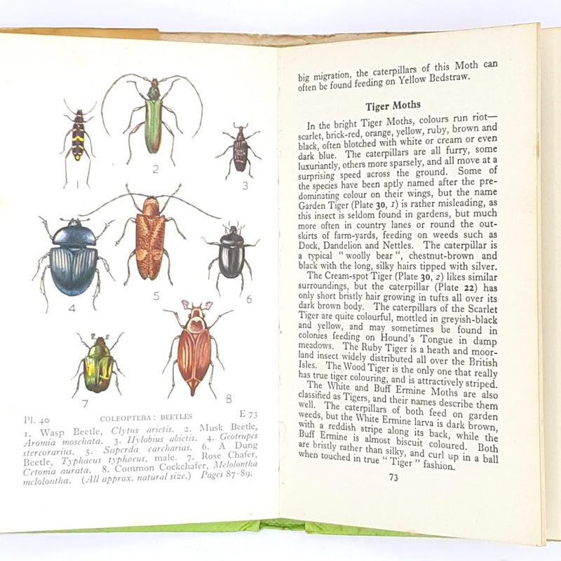 Common Insects & Spiders 1975