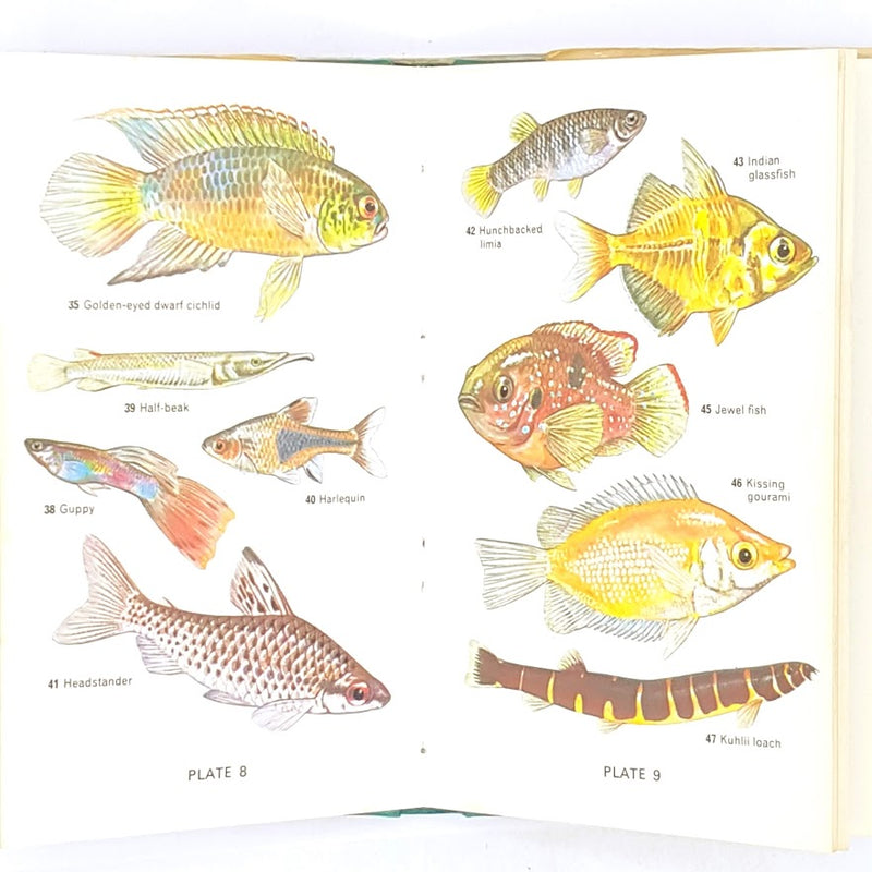 classic-old-first-edition-decorative-observer-antique-1976-books-library-vintage-thrift-patterned-country-house-tropical-fishes-