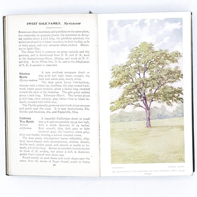 Fieldbook of American Trees and Shrubs by F. Schuyler Mathews 1915
