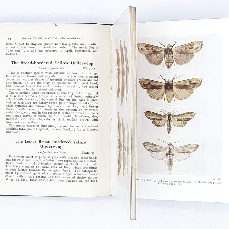 Butterflies and Moths of Wayside and Woodland by W. J. Stokoe 1949