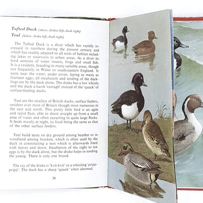 ladybird-animals-pond-river-birds-british-country-house-library