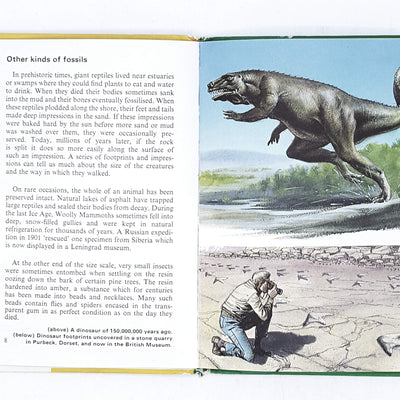 ladybird-animals-prehistoric-animals-kindergarten-books-yellow-country-house-library