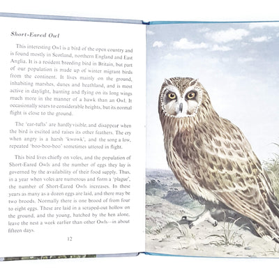 ladybird-animals-birds-of-prey-kindergarten-books-country-house-library