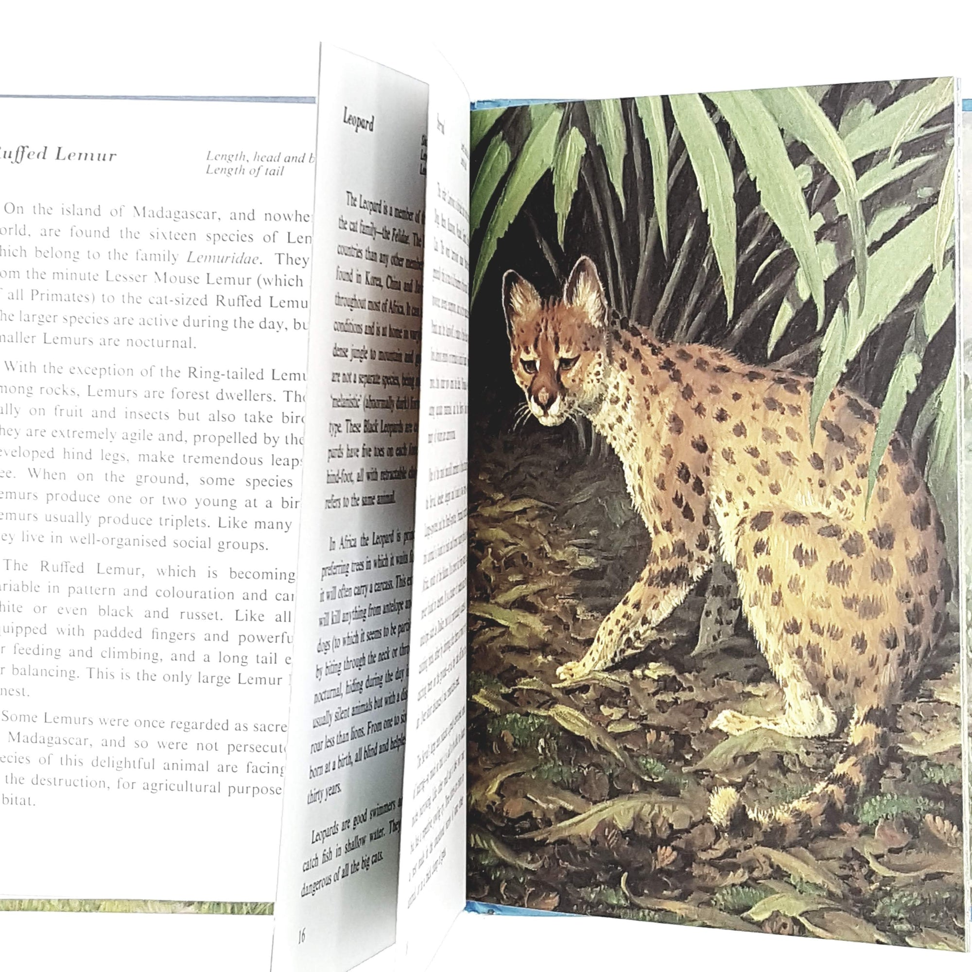 ladybird-animals-african-mammals-kindergarten-books-country-house-library