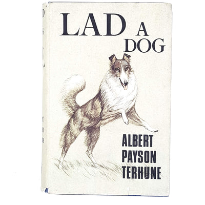 illustrated-lad-a-dog-country-house-library
