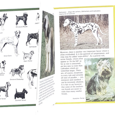 green-vintage-ladybird-training-your-dog-kindergarten-books-country-house-library