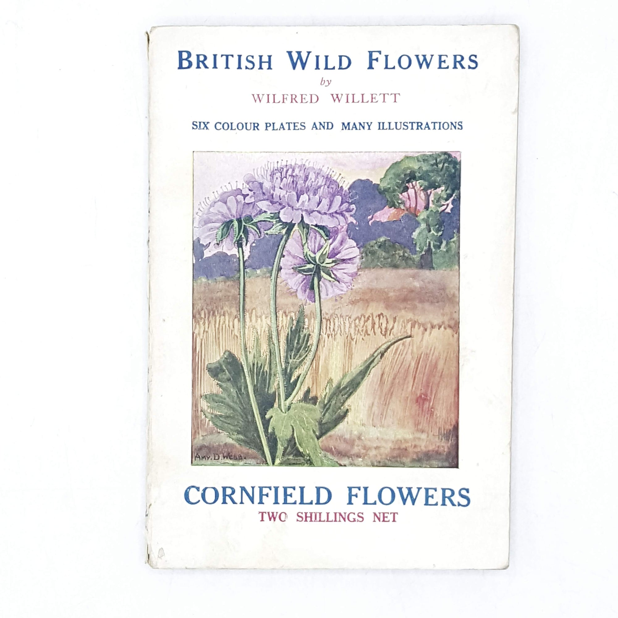 British Wild Flowers: Cornfield Flowers by Wilfred Willet