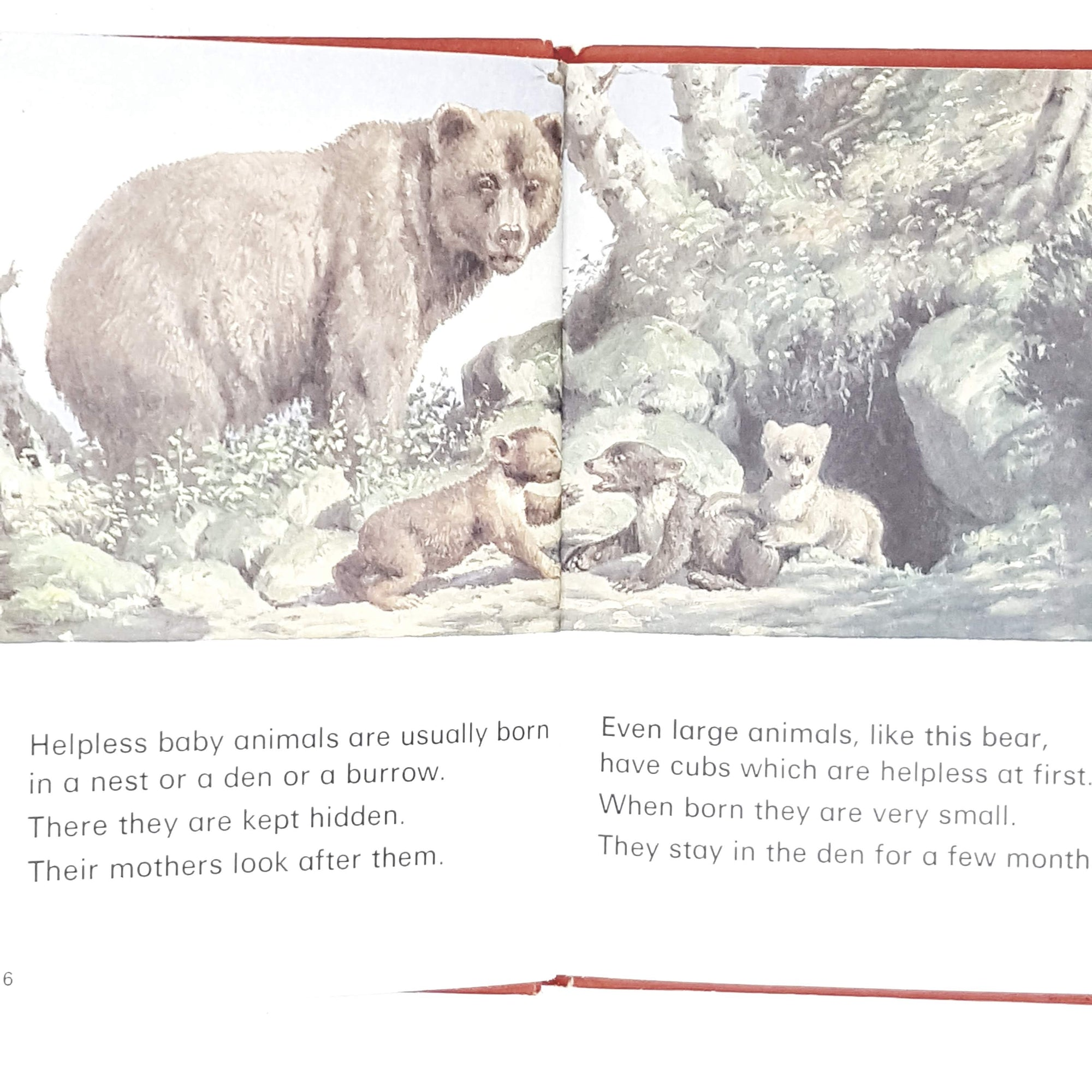 ladybird-leaders-baby-animals-1974-country-house-library