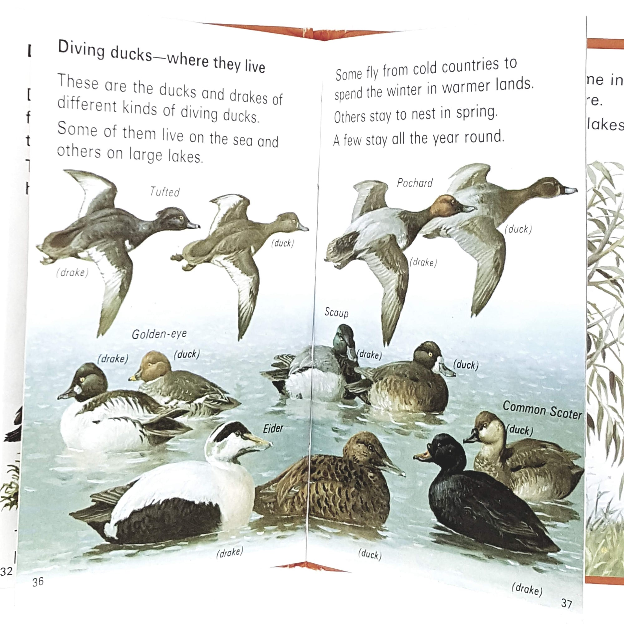 ladybird-leaders-ducks-and-swans-1973-country-house-library