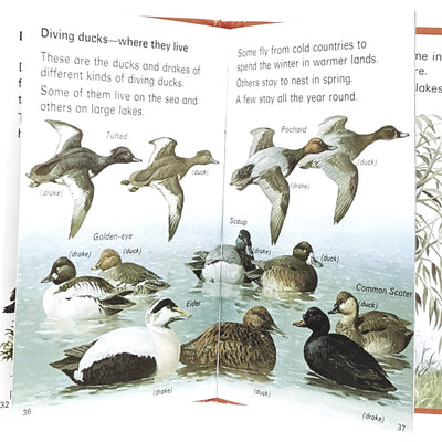 ladybird-leaders-ducks-swans-1973-country-house-library