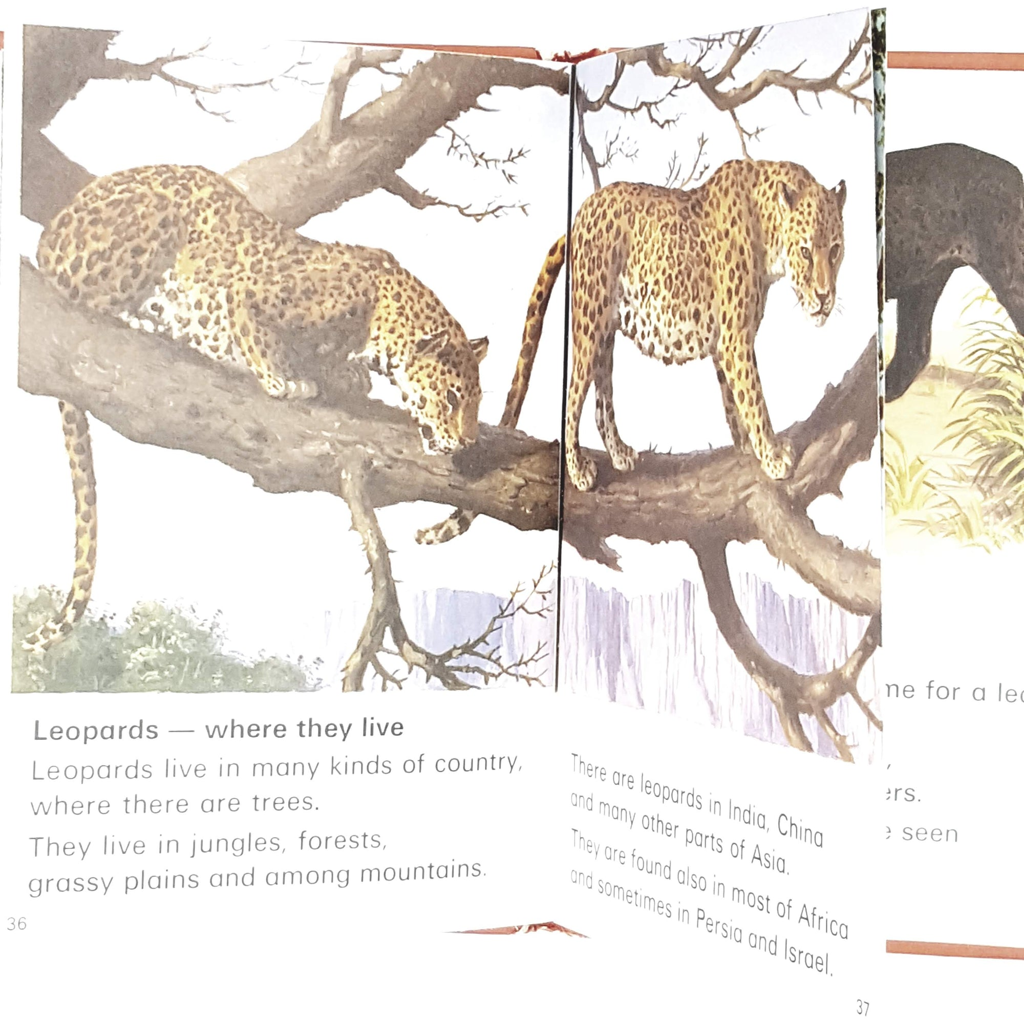 ladybird-leaders-lions-and-tigers-1974-country-house-library