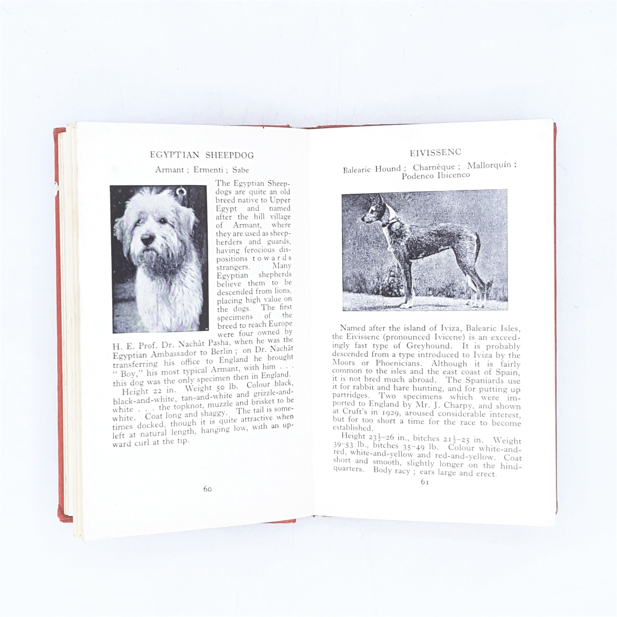 Observer's Book of Dogs 1962