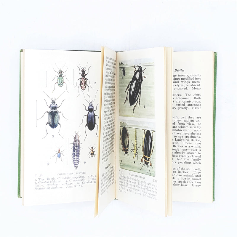 Observer's Book of Common British Insects and Spiders 1953
